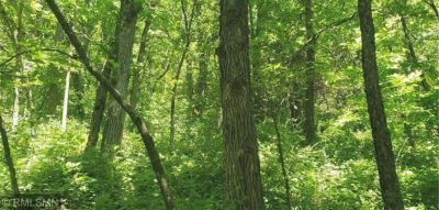 Hunting Property Land for Sale in Preble Township - Bluff Country Properties - Jeff Brogle - Timber Ghost Realty
