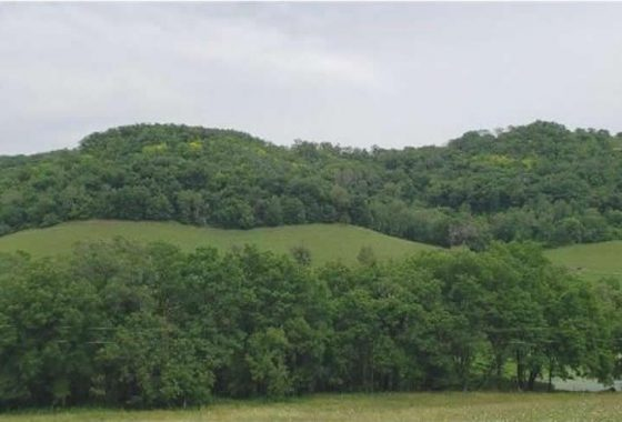 Spooner Road - Alma Twp - Bluff Country Properties - Enjoy >Deer, Ducks, and Turkey! Great hunting property in Buffalo County 1.2 miles north of the Mississippi River.